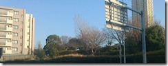 見えにくけど、木が生えている所が、跡地。